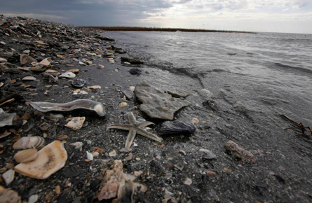 Cleaning up the world's worst oil spills