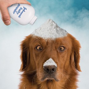 How everyday products can cure your pet