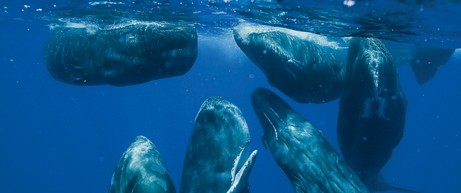 In the company of whales