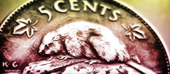 Why Is The Beaver Canadas National Symbol All About Canadian History