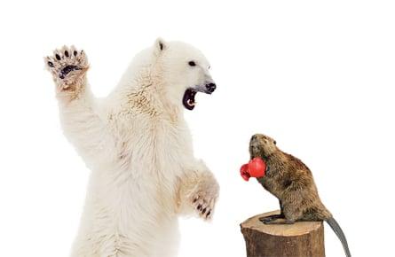 Beaver be dammed