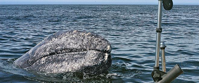 A coastal whale tale