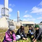 Alexia Gezink, Kayley Marsh, Kirsten Goeckel and Dan Legault tend to the rooftop vegetable garden