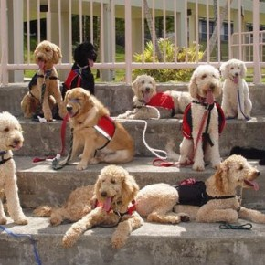 Therapy dogs in Hawaii (Photo: Beverly & Pack on Flickr)