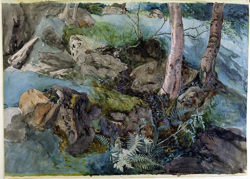 John Ruskin, Rocks and Ferns in a Wood at Crossmount, Perthshire 1847. (Courtesy of Abbot Hall Art Gallery, Lakeland Arts Trust, Kendal, Cumbria, UK. Reproduced by courtesy of Abbot Hall Art Gallery)