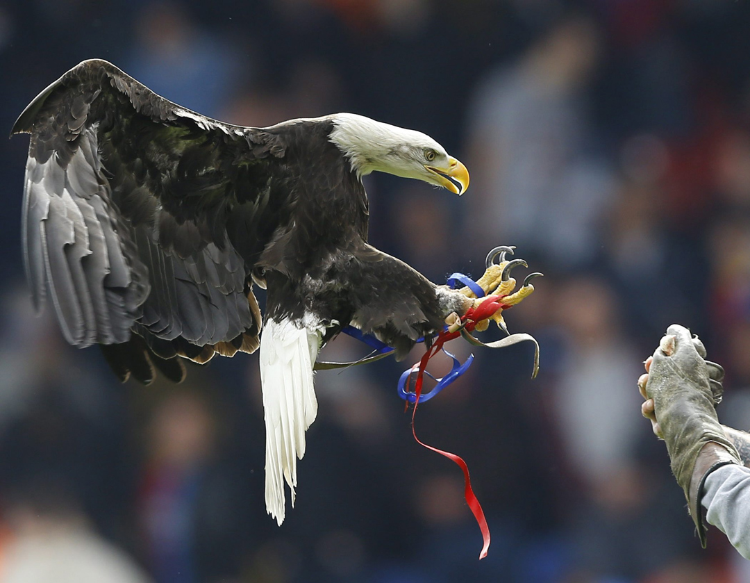 Bald eagles are among the animals listed as endangered in Ontario. (AP Photo/Kirsty Wigglesworth)