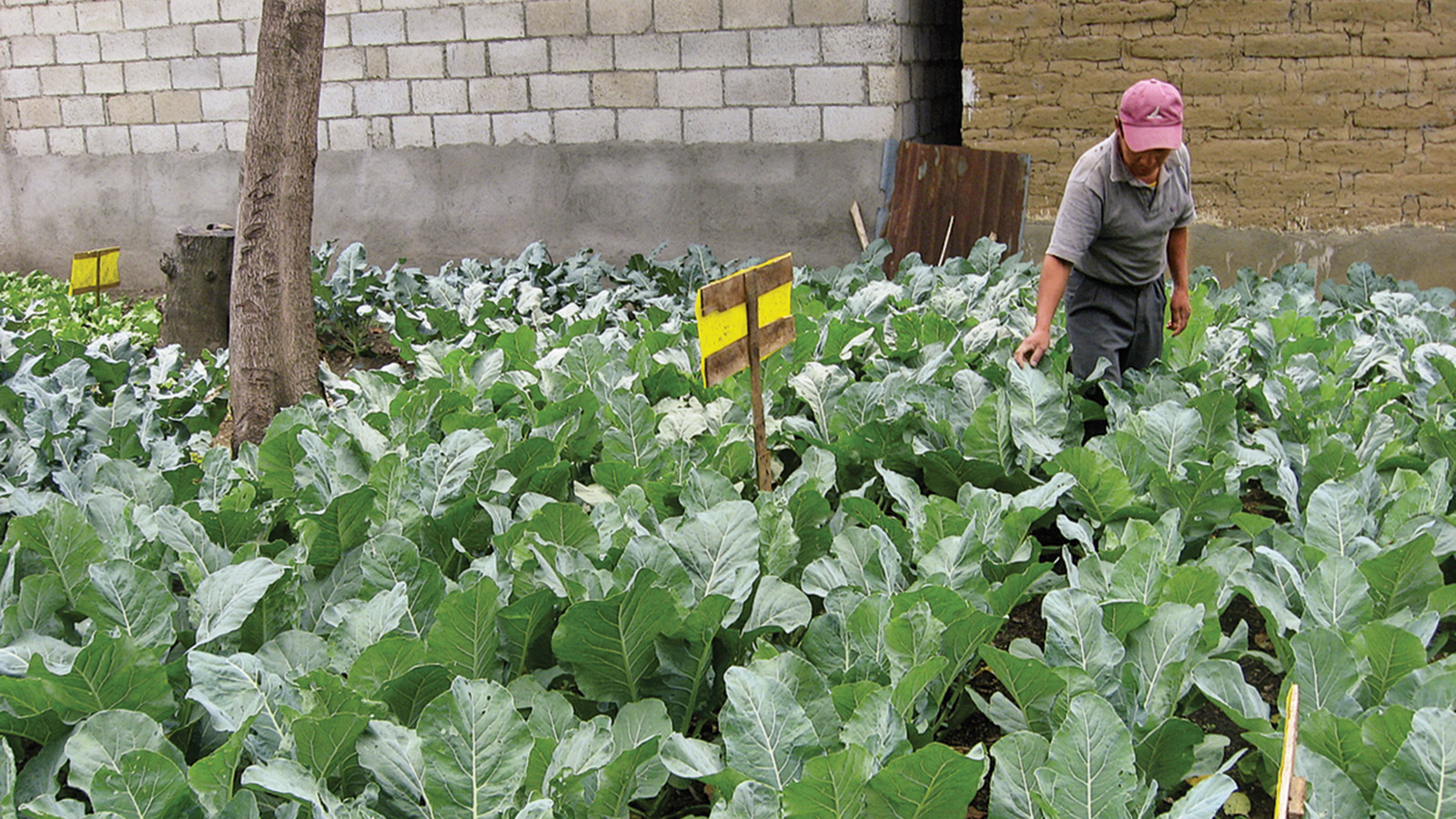 G. Adventures has a program to help farmers in Guatemala convert to organic agriculture
