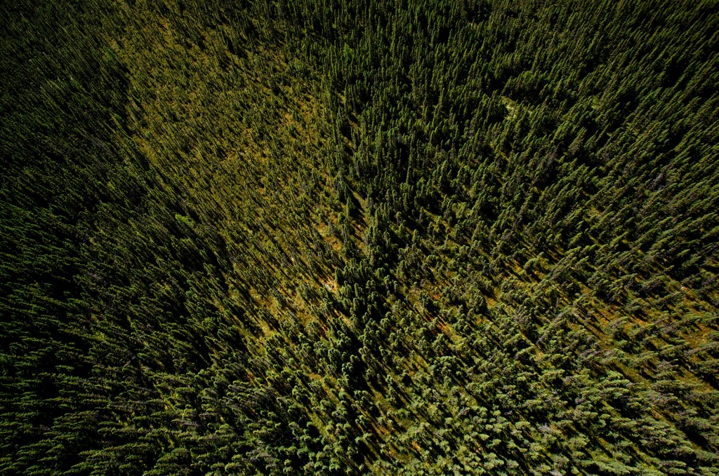 Sea of green: The boreal forest in Cochrane, Ont.