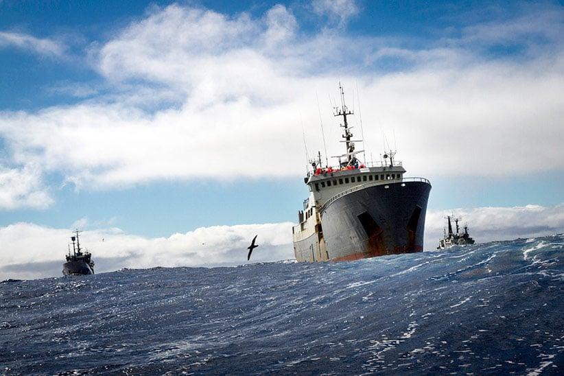Simon Ager/Sea Shepherd Australia