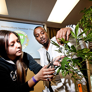 Oaksterdam University, which is the only cannabis university in the world, California, America - Jan 2014