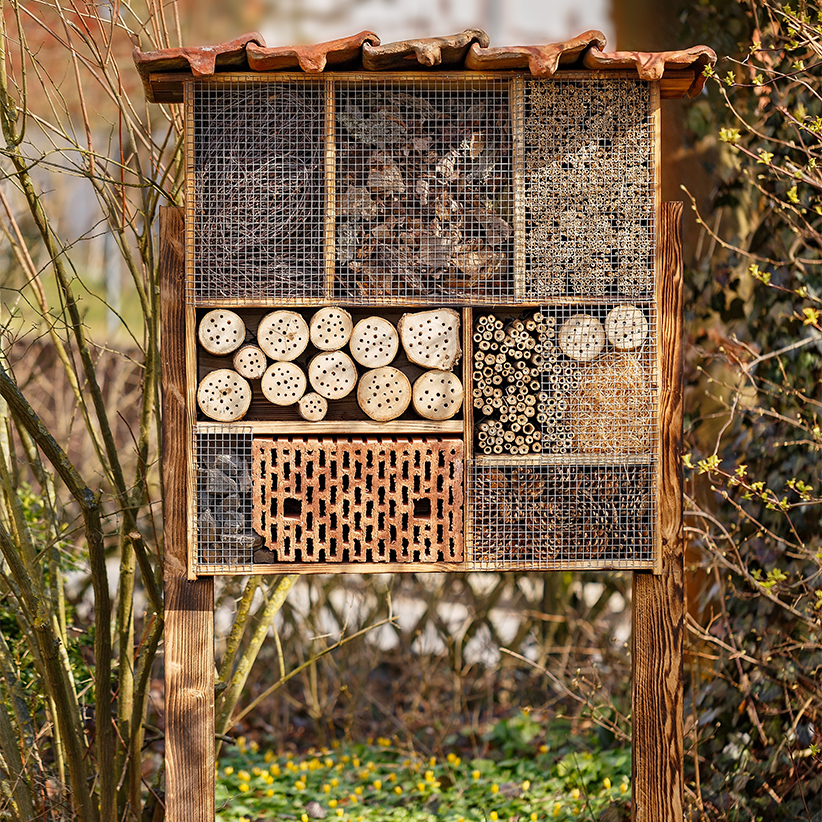Are Bee Hotels The Answer To Saving A Species Macleansca