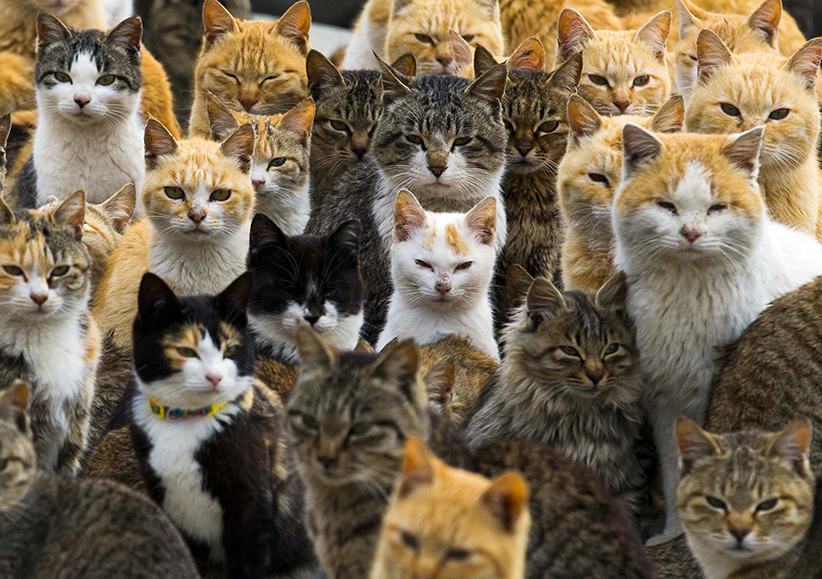 Cats crowd the harbour on Aoshima Island in the Ehime prefecture in southern Japan February 25, 2015. An army of cats rules the remote island in southern Japan, curling up in abandoned houses or strutting about in a fishing village that is overrun with felines outnumbering humans six to one. Picture taken February 25, 2015. (Thomas Peter/Reuters)
