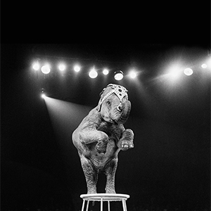 An elephant act at a circus performance on December 19,1958. (Trinity Mirror/Mirrorpix/Alamy Stock Photo)