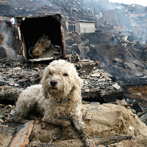 A dog sits near the remains of a house after a fire in Comuna 13 in Medellin, Colombia. (Fredy Amariles/Reuters)