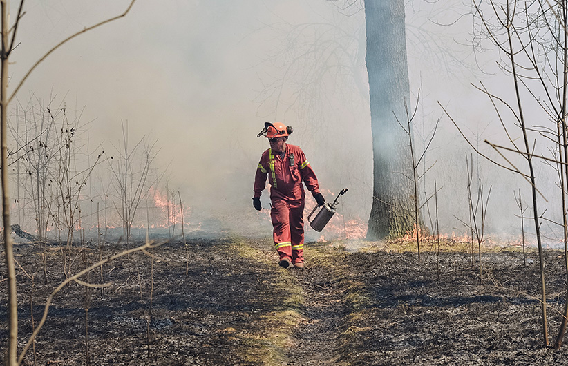 A fire control expert selectively lights small shrubs during a prescribed burn in High Park, Toronto, on April 15, 2016. (Kenneth Chou)