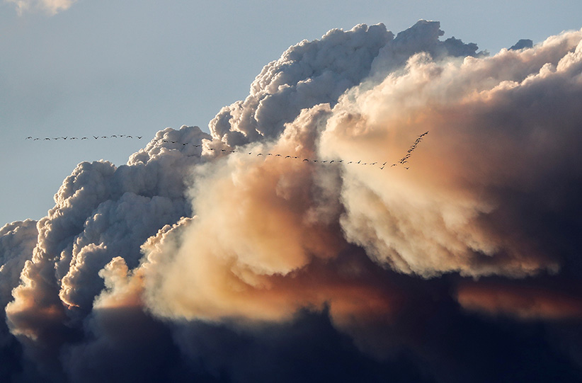 A flock of birds fly as smoke billows from the Fort McMurray wildfires in Kinosis, Alberta, Canada, May 5, 2016. (Mark Blinch/Reuters)