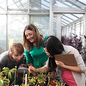 McMaster University students in the Biology Greenhouse collect data such as plant measurement and aphid count. (Photograph by Jessica Darmanin)