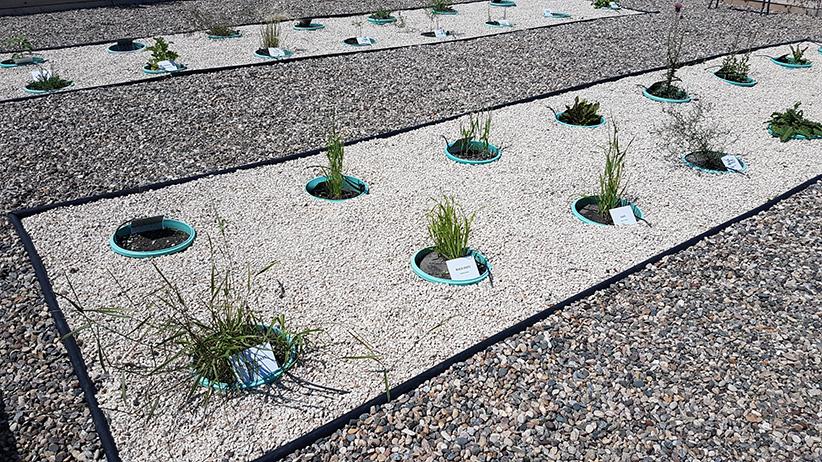 Assiniboine Community College Weed Identification Garden