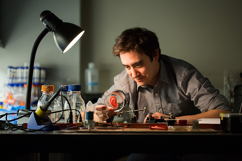 Andrew Pelling infuses apple slives with human cells to grow inexpensive biomaterials. (Bonnie Findley)