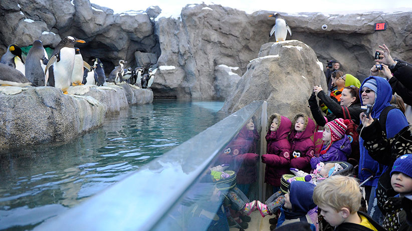 Adults and children check out penguins at the Calgary Zoo in Calgary, Alberta. (Larry MacDougal/CP)