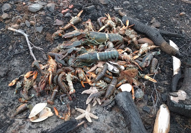 Dead sea creatures are shown washed ashore in Savary Provincial Park near Digby, N.S. on Monday Dec. 26, 2016 in this image provided by Eric Hewey. A retired scientist says photos showing lobsters, starfish and clams washed ashore in western Nova Scotia could be linked to tens of thousands of herring in St. Mary's Bay. THE CANADIAN PRESS/HO-Eric Hewey MANDATORY CREDIT