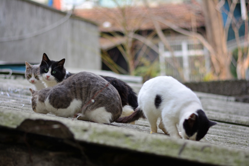 Cats on a corrugated roof. (mer Fuat Eryener/EyeEm/Getty Images