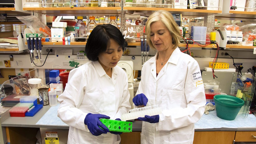 Jennifer Doudna, right, and her lab manager, Kai Hong, work in her laboratory in Berkeley, Calif. in 2015. Doudna was a leading developer of the gene-editing technique CRISPR-cas9 (Cailey Cotner/UC Berkeley via AP)