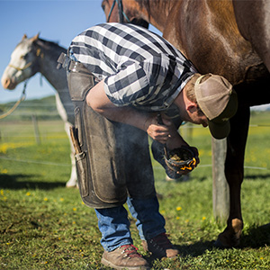 Farrier shoes a horse
