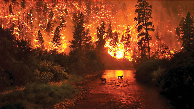 "CAPTION: John McColgan, a BLM firefighter, took photos on August 6th, 2000 while fighting fires in the Bitterroot Valley of Montana. McColgan says he ""just happened to be in the right place at the right time"" with his Kodak DC280 digital camera. McColgan could not be found for days after the one of those pictures spread like wildfire on the Internet."
