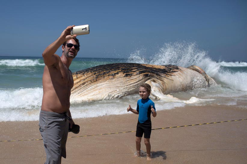 A man takes a selfie in front of a 12 meters whale that was found dead at Ipanema beach in Rio de Janeiro, Brazil, on November 15, 2017. (Leo Correa/AFP/Getty Images)