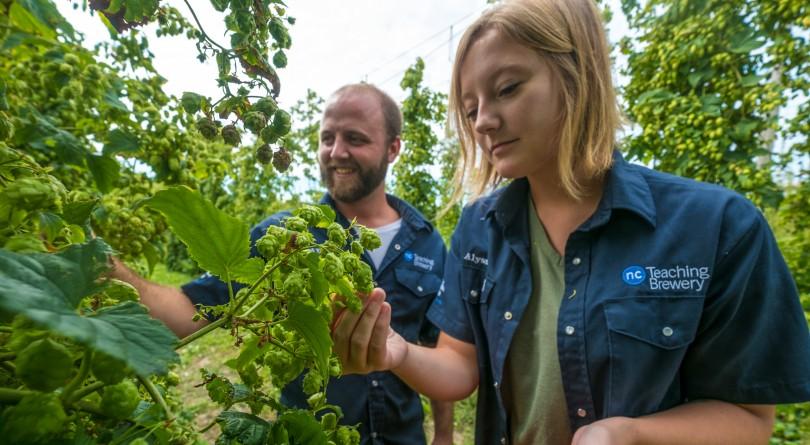 Niagara College students picking berries