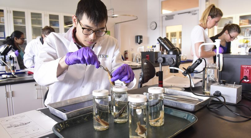 University of Toronto student identifying fish in a lab