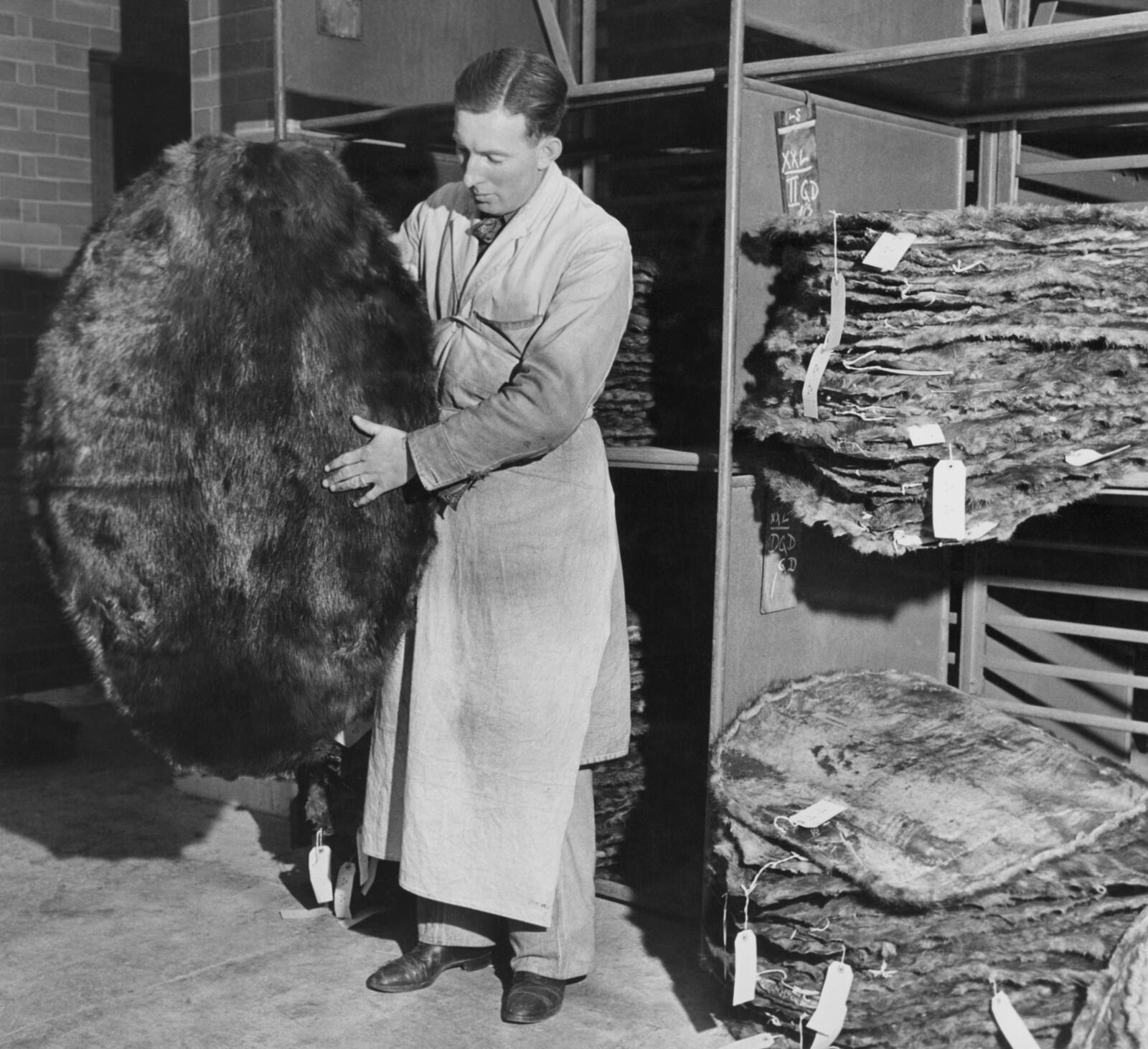 A worker inspects beaver pelts at HBC's York Factory in 1946 (George Konig/Keystone Features/Getty Images)