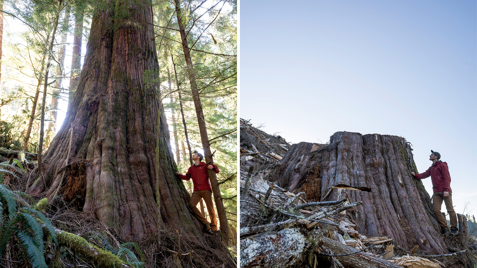 Watt's 'before and after' photos have drawn worldwide attention to old-growth logging in B.C. (TJ Watt)