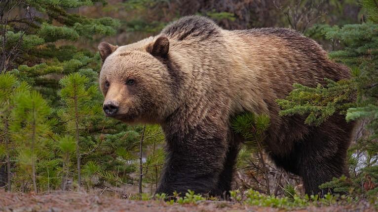 Jasper, Canada (Denis Yankin/EyeEm/Getty Images)
