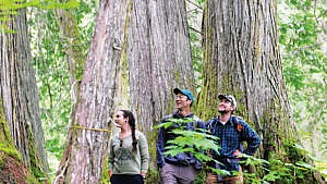 Chun T'oh Whudujut/Ancient Forest Provincial Park, a protected inland rainforest located 115 km east of Prince George, hosts experiential learning and research opportunities for UNBC students. (Courtesy of University of Northern British Columbia)