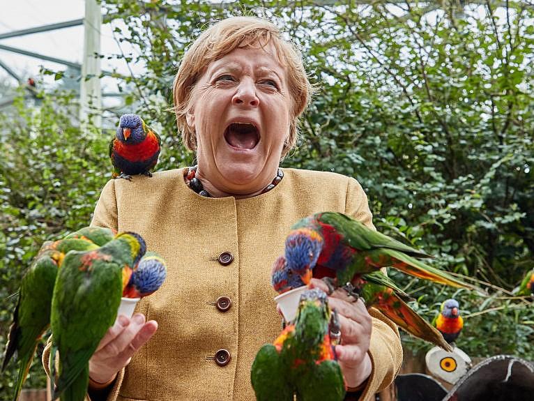 23 September 2021, Marlow: Angela Merkel (CDU), German Chancellor, feeds Australian lorises at Marlow Bird Park and gets bitten. (Georg Wendt/Getty Images)